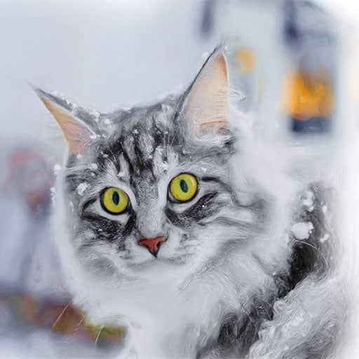 Pet-portraits-cat