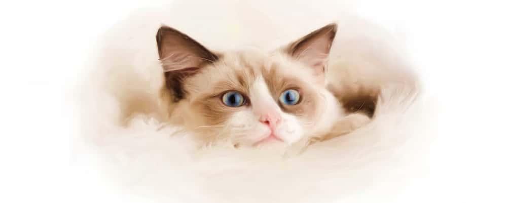 Pet-portraits-cats