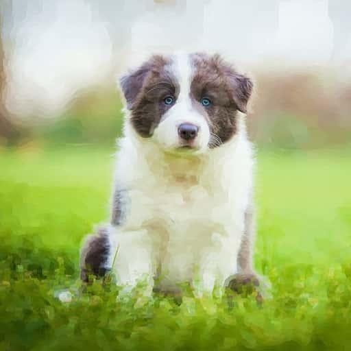 Pet-portraits-dog-1
