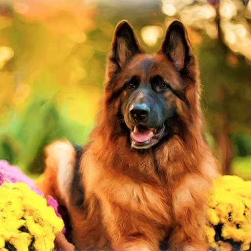 Pet-portraits-dog-2
