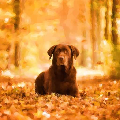 Pet-portraits-dog-3