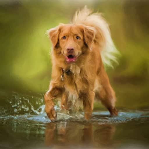 Pet-portraits-dog-4