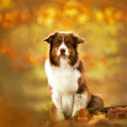 Pet-portraits-dog-5