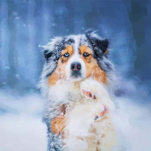 Pet-portraits-dog-6