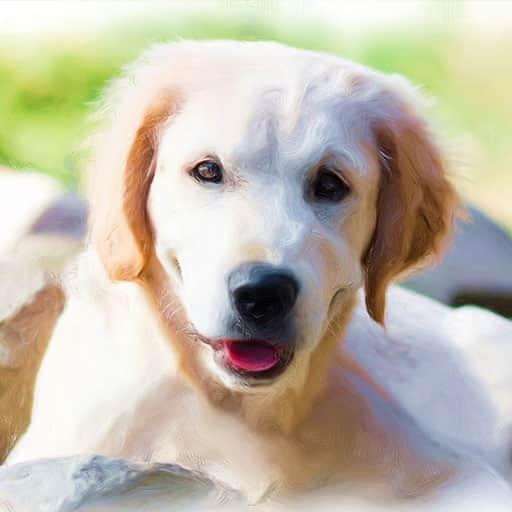 Pet-portraits-dog-7