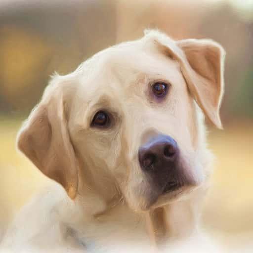 Pet-portraits-dogs