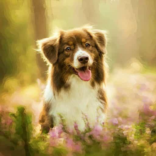 pets-portrait-dog-11